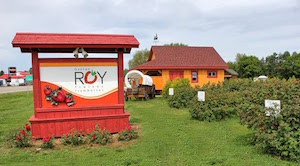 Fraises Gaétan Roy - Lanaudière, Lanoraie