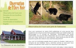 Observation de l'ours noir - Côte-Nord / Manicouagan, Sacré-Coeur
