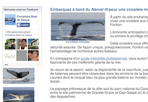 Croisière aux Baleines à Forillon - Gaspésie, Ville de Gaspé (Forillon)